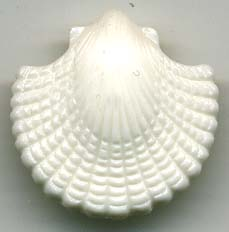 28L Shank Button Sea Shell-Off White - Plastic Buttons